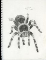 this did not cure my arachnophobia... by DeeDraws