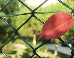 caged autum leaf by deniztist