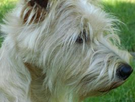 Mutley Profile by yorksensation