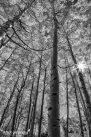 Warmth of the Sun BW by mjohanson