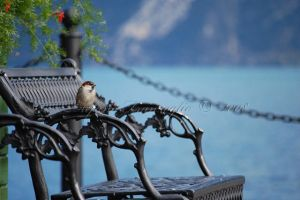 The little bird by ilfranzo