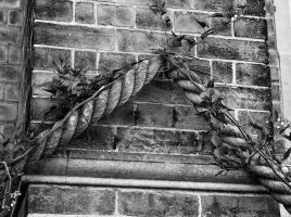 Rope by Bazz-photography