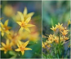 yellow flowers by Anti-Pati-ya