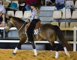 STOCK - 2014 Total Equine Expo-48 by fillyrox
