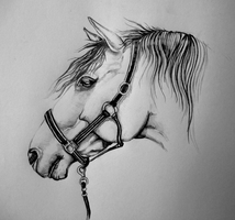 Another horse by Hamsel