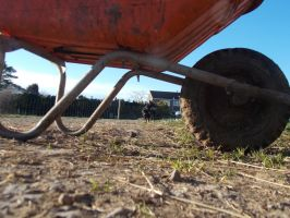 Under the wheel barrow spying on a dog by spirtofthedevil