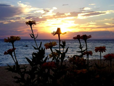 Flowers watch sunsets, too. by carinutz