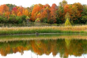 Michigan Autumn by Calathea