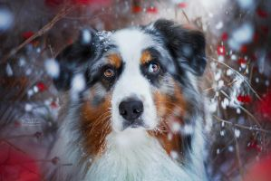 Let it snow by KristynaKvapilova
