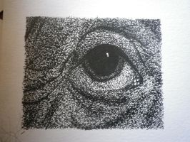 Albert Einstein's eye. 2 by Mad-Mad-Muffin