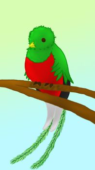 Quetzal by ingridE98