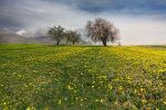 First steps of spring by Chris-Lamprianidis