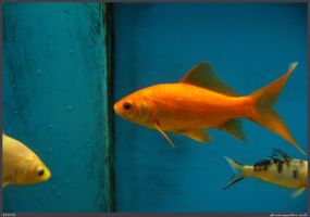 Fish Stock 0016 by phantompanther-stock
