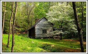 Dogwood and Cabin by TRBPhotographyLLC