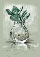 Crassula by dh6art