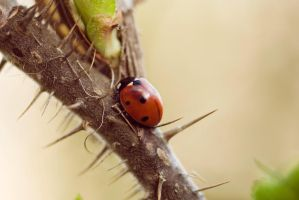 Little ladybug by LauraCallsen
