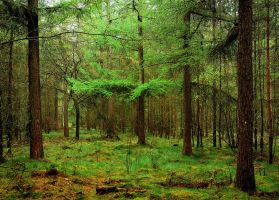 The forest is quickly getting greener again by jchanders