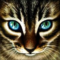 Brown Tabby Kitten by Wynnyelle