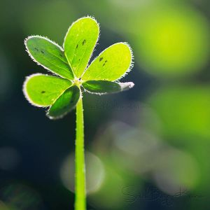 Every Clover has a Silver Lining by Sarah-BK