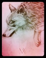 Wolf =] by youngxsin