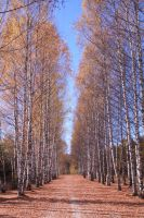 Tree Row 161087 by StockProject1