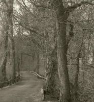 Sleepy Hollow Gothic Trail 2 by body-electric
