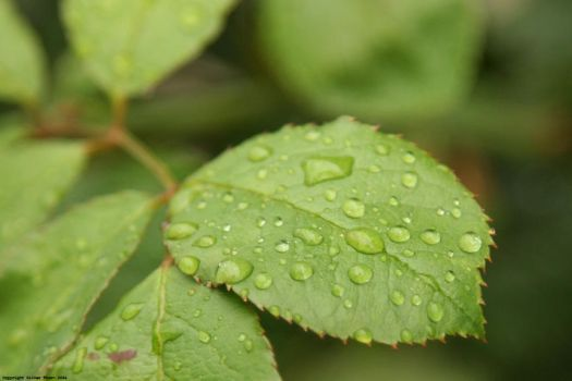 Droplets on Leaf by i-have-a-face