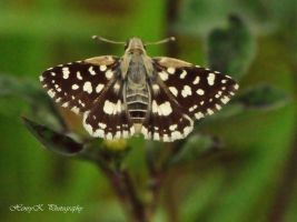 And-the-butterfly by fotoponono