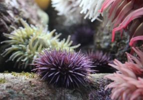 Sea Urchin Gardens by meeks105