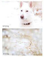 White snow and circles by Makrills