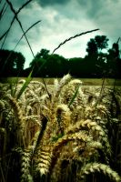 In the field by Floridel