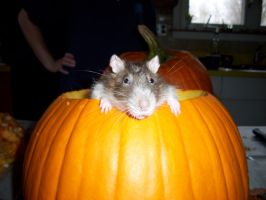 -Old- Charlie in his pumpkin by Vaintiy-Fair