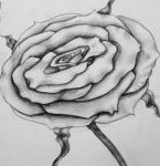 The Rose by guen20