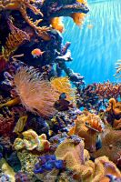 Coral Reef by Ceardach