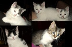 toni and charlies kittens growing up by analovecatdog