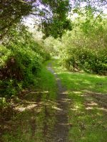 Nature's Path by Treeclimber-Stock