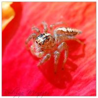Cute Spider 3-3 by ironmanbr