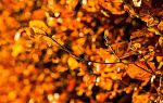 Autumn Colours 2 by Stuartf