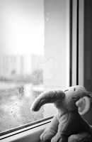 Watching the rain drops fall by Kiwi29