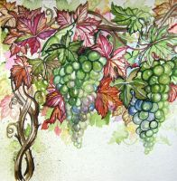 Watercolor Grapes 1 by HouseofChabrier
