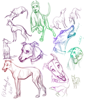 Greyhound studies by Edenfur