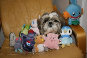 My Dog and Pokemon's by Phewmonster