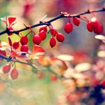 Fruits of Autumn. by magnesina