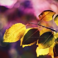 L'autunno by Suvetar
