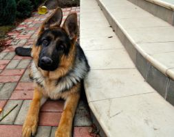 Rocky - 8 months by ratonz0id