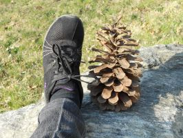 My Pinecone Is Size Seven by Rangavar