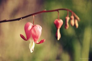 Bleeding Heart by Ashwings