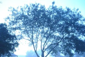 Tree and fog II by RipperBlack666