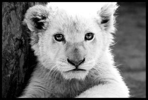 White Lion Cub by TonallyTormented