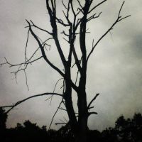 Dead treew ith clouds by LunaPicture